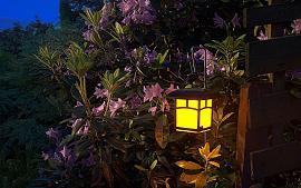 LED verlichting in je tuin!