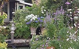 SOS zoekt tuinen voor eerste Sassenheimse Open tuinendag