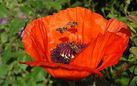 Doe mee aan de Bijenlandschap Fotowedstrijd!