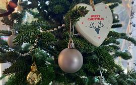 Kerstbomen ophalen