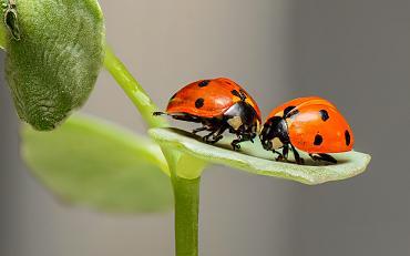Wereldbiodiversiteitsdag
