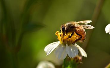 Online bijeenkomst Groene Cirkel Bijenlandschap
