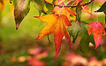 Herfstbladeren, bessen en zaden zoeken