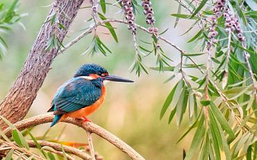 Online Natuurlezing: De Vogels en hun namen