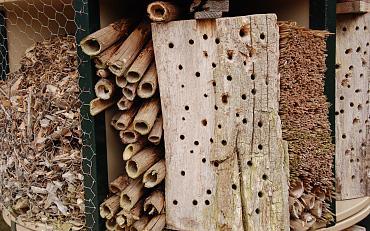 Webinar: insectenhotel