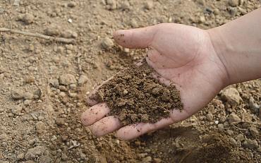 Online Amberworkshop: Bodem en bodemstructuur