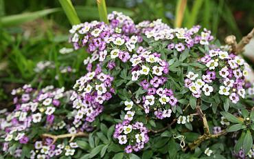 Groei en Boei - 3 mei Kleurenpalet van de tuinontwerper door Modeste Herwig