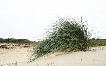 Struinen in de duinen (jeugdactiviteit)