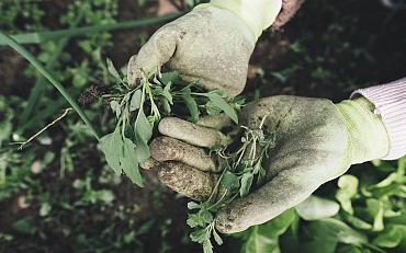 Inspiratie voor een groene tuin