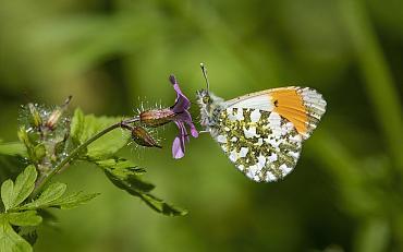'Samen voor Biodiversiteit' Innovatiefonds!