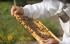 Hoe kun je de bijen helpen?