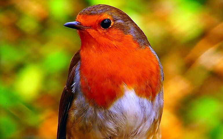 Nationale Vogelweek 2021