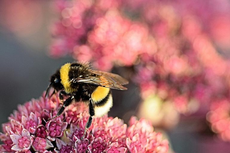 Inspiratie Webinar Wilde Bijen Herkennen, Tellen en Verwennen