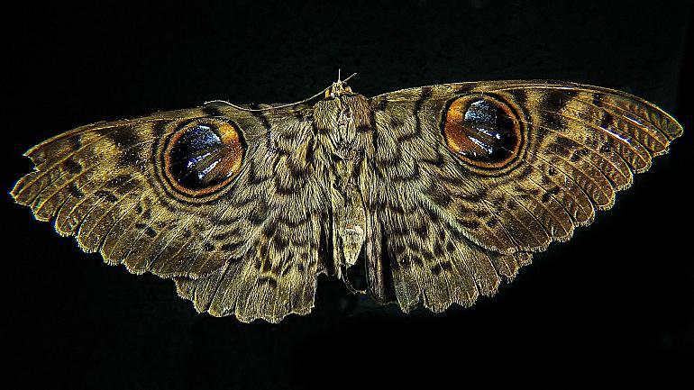 Nacht van de Nachtvlinder