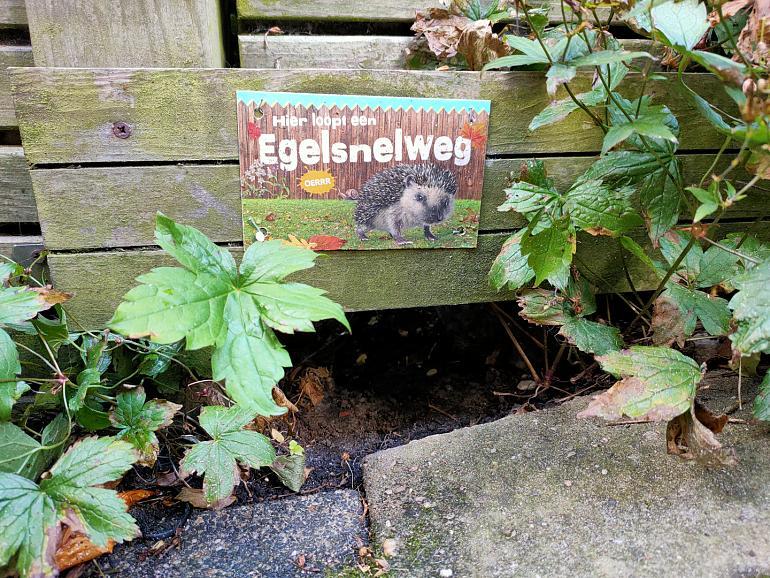Geniet van je tuin in de herfst met de tips van de tuinambassadeurs